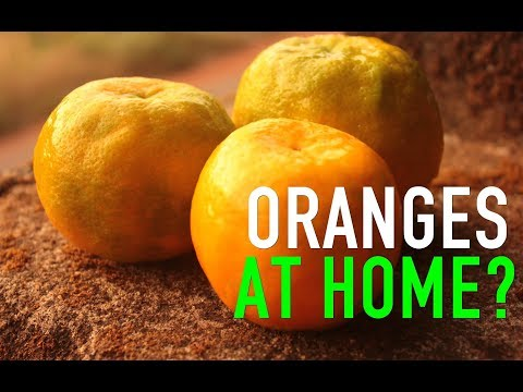 Growing Oranges in few days at home! Is it possible?