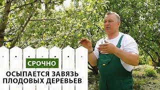 Почему осыпается завязь на плодовых деревьях(, 2016-06-15T13:23:40.000Z)