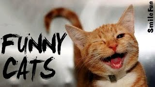 Funny Cats 2017 to tears Fun with cats Cats