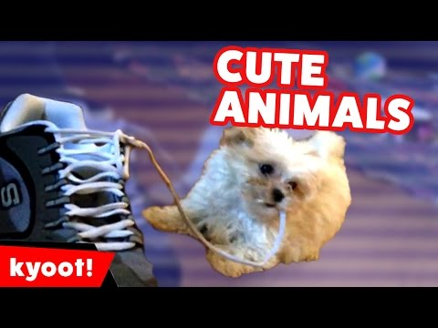Running of the Dogs & Puppies & More Cute Pet Videos of 2016 Weekly Compilation | Kyoot Animals