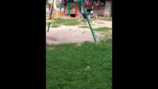 Дикие собаки живущие на детской площадке в железнодорожном