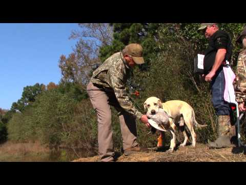 AKC Master Hunt Test - Keith Maready Runs Luke in 3rd Series at Neuce Retriever Club 10-27-13