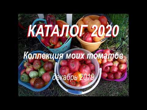 Каталог томатов 2020
