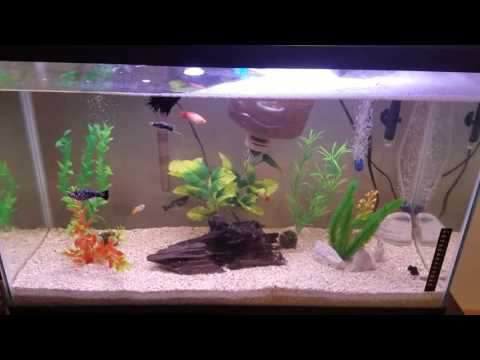 Community Fish Tank With Angel And Betta Fish (HD)