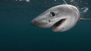 New Top 5 Myths About Sharks 2016