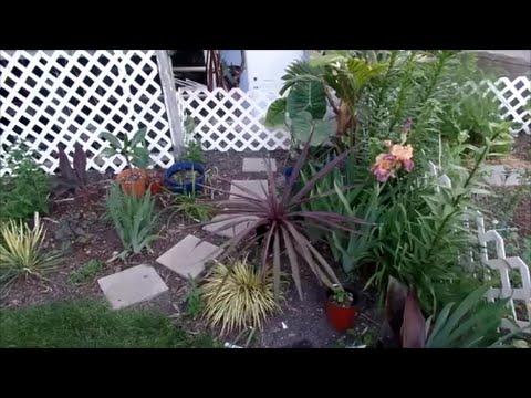 tropical garden planted june 2016 youtube - Tropical Garden 2016
