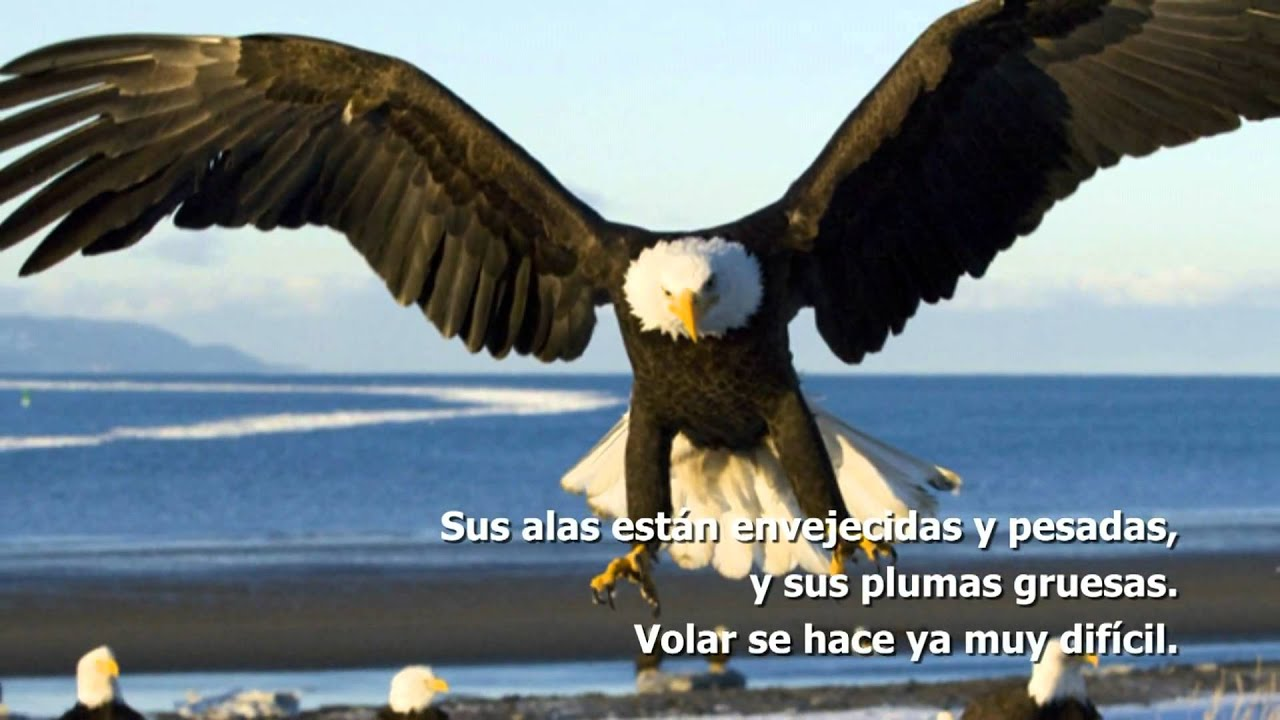 La Renovacion Del águila Hd Motivacion