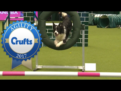 Agility - Crufts Singles Heat - Large (Jumping) | Crufts 2017