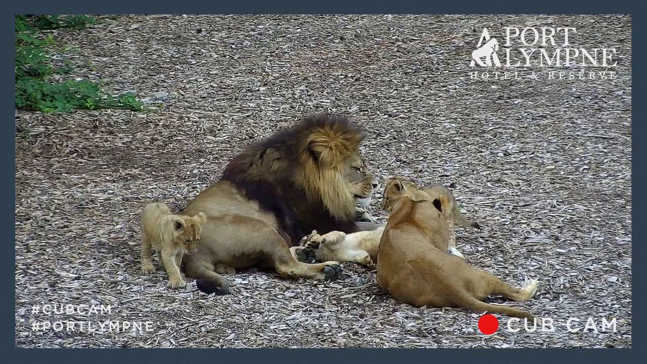 Lioness Of God