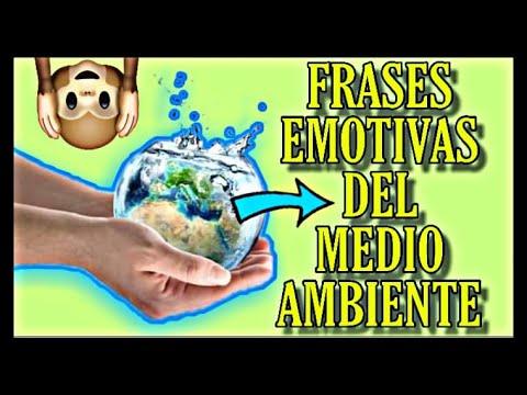 Frases Emotivas Al Cuidado Del Medio Ambiente