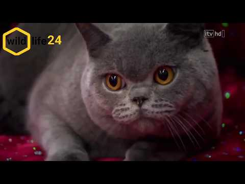 The life of cats - part1-with the best documentary in the world