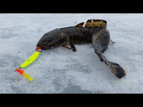 Налим ловля в карелии зимой
