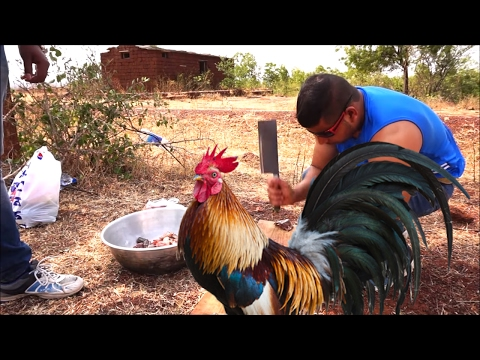 Thumbnail: COOKING CHICKEN CURRY - CHICKEN RECIPE - COOKING TWO WILD CHICKENS - COOKING AND EATING
