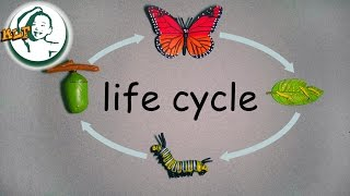 Learn butterfly life cycle for kids with safari ltd life cycle toy | 蝶のライフ サイクル |
