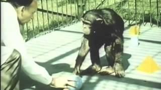 История разума. Думают ли животные. Классика научного кино, режиссер Феликс Соболев