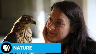 NATURE   H is for Hawk: A New Chapter: Official Trailer   PBS