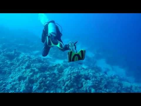 Scuba Diving at Sultan Gardens with DiveOne - Sharm El Sheikh - Egypt