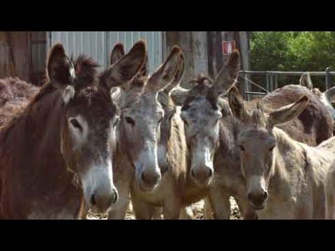 Smart Donkeys