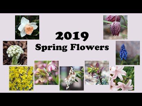 2019 Spring Flowers