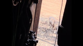 Bowhunting a HUGE Blesbok - African Bowhunting Adventures