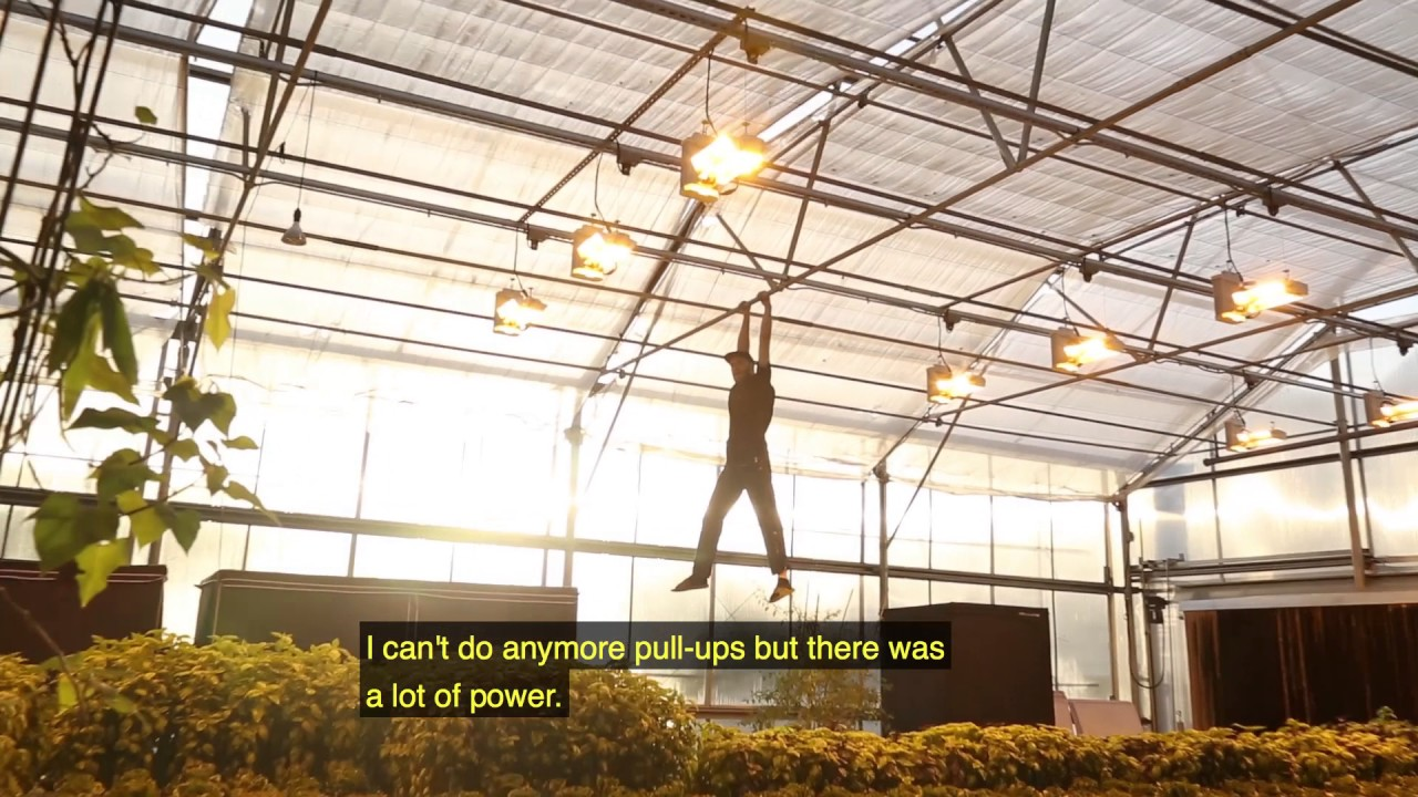 So Much 1000w Double Ended High Pressure Sodium Lights In A Greenhouse Phantom De Hps