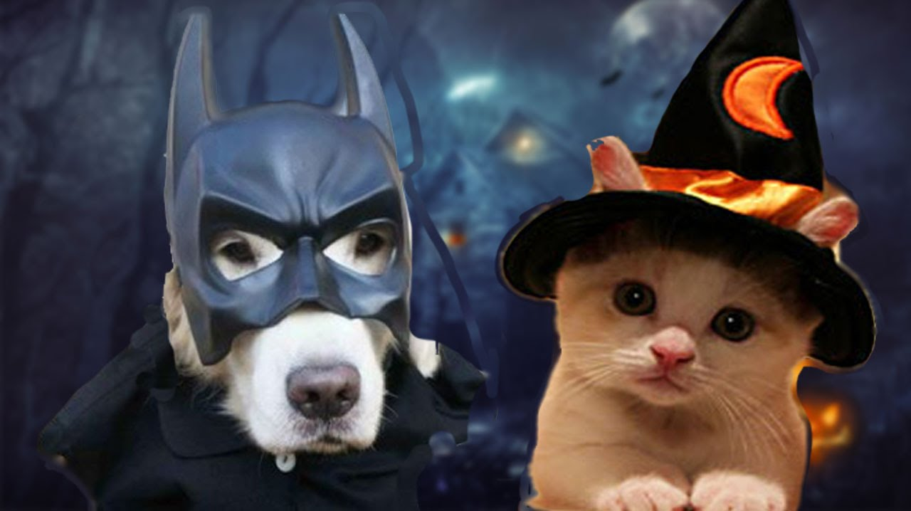 ANIMALS IN HALLOWEEN COSTUMES  sc 1 st  YouTube & ANIMALS IN HALLOWEEN COSTUMES - YouTube
