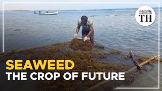 Why is the demand for seaweed growing?