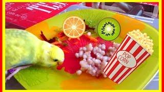 питание попугая ч.4. Что можно попугаю. Чем кормить попугая кроме корма #еда #птицы
