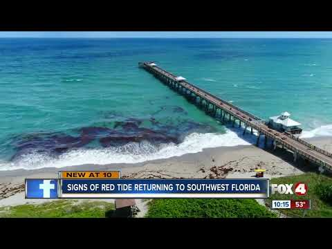 Red Tide lingering around Southwest Florida