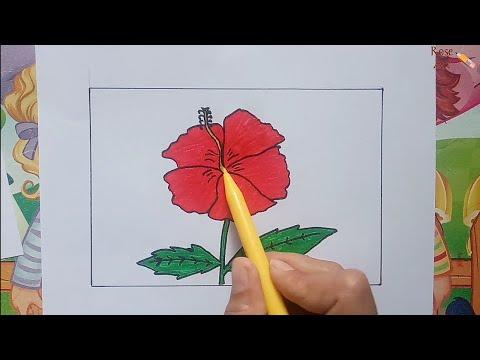 Cara Menggambar Dan Mewarnai Bunga Kembang Sepatu Youtube