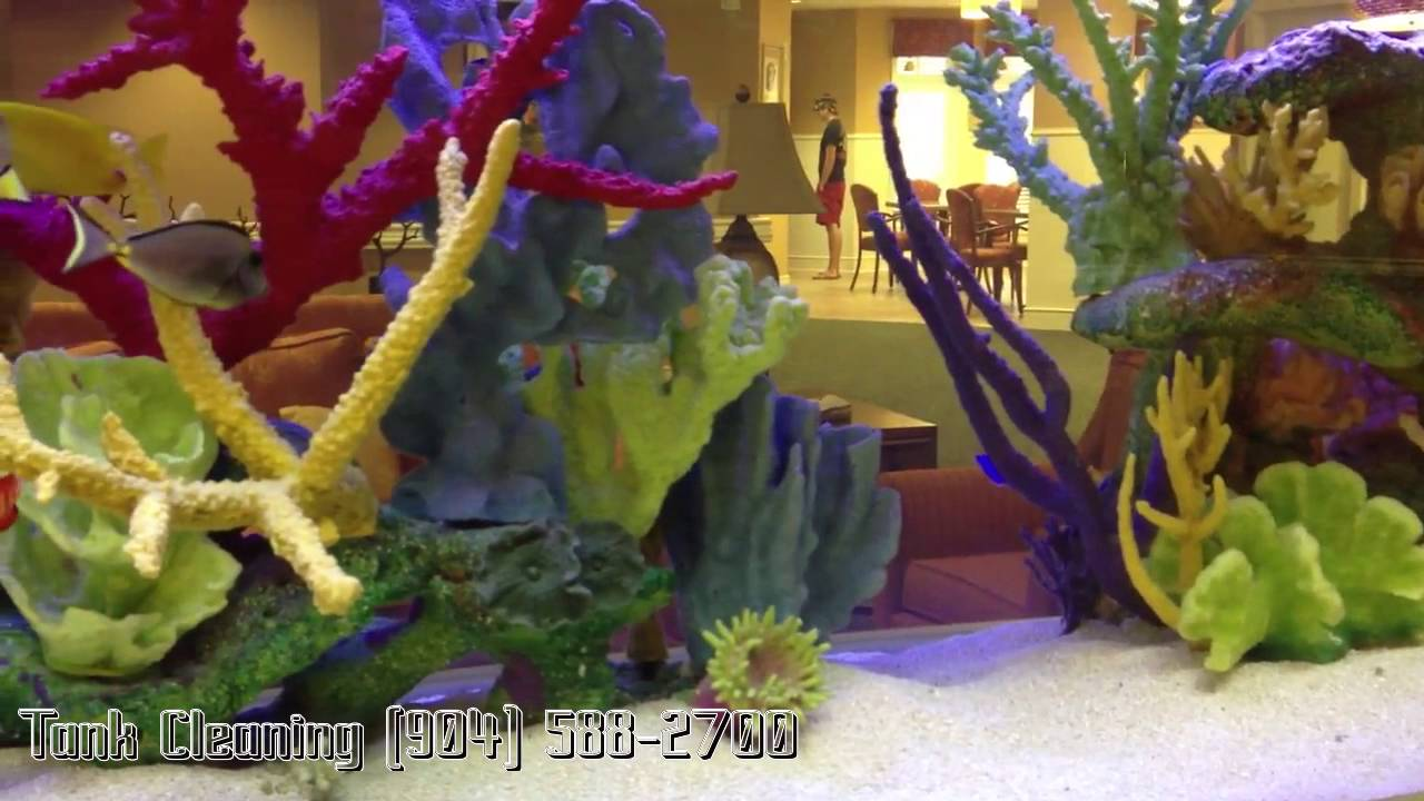 Fish tank cleaning service - Aquarium Cleaning Service 904 588 2700 Fleming Island Florida