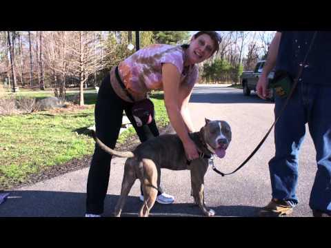 Shelter Dog Training Program: Easy Walk Harness (Heritage Humane Society)