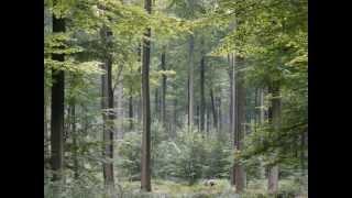 видео Достопримечательности Бельгии