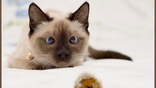 Самое смешное про кошек. Ну очень смешные кошки!