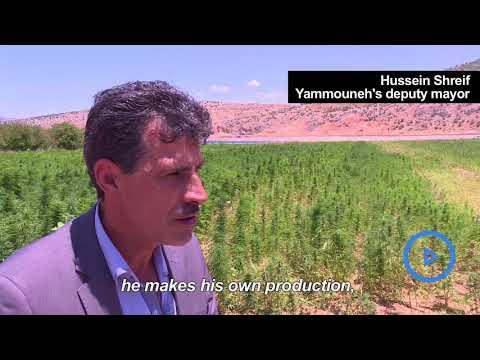 Lebanon's hash farmers fear going legal may hit profits