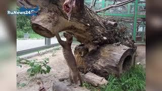 В Новосибирском зоопарке животным приходится добывать еду / RuNews24