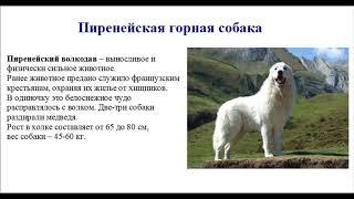 ТОП самых сильных собак в мире