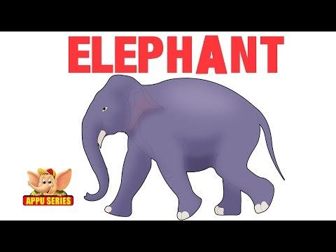 Animal Sounds - Elephant