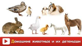 ДОМАШНИЕ ЖИВОТНЫЕ и их ДЕТИ - Как ГОВОРЯТ животные - Развивающее ВИДЕО домашние животные ДЛЯ ДЕТЕЙ
