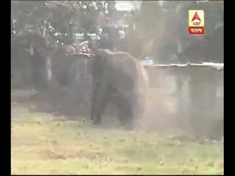 An elephant entered into Siliguri locality, ransacked houses, shops, smashed bikes, cars