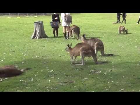 Kangaroo Park in Australia