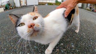 腰トントン好きな三毛猫