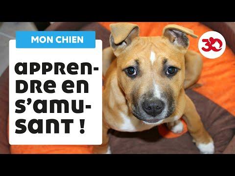 Assurance Canine - 20 techniques à connaître - Éducateur canin