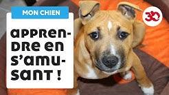 Education du chien : les bases de l'éducation canine