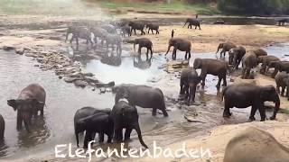 Sri Lanka - 10 Tage Rundreise