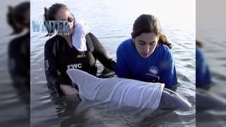 original-footage-of-winter-s-rescue