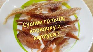 Вяленная корюшка, голец и хариус. Испытание сушилки для рыбы.