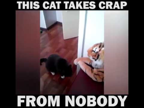 Angry Cat **Funny Video**