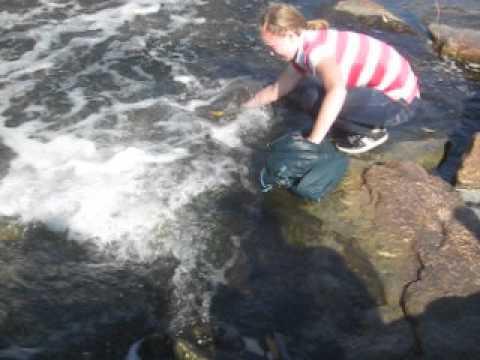 Salmon Spawning @ Morningside Park
