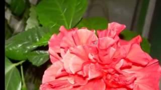 Самопознание Позитивный настрой 11кл  Вечный поиск,вечный путь  YouTube